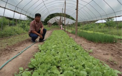 Find Out How Organic Farming Benefits Farmers, Consumers, Buyers and Traders!
