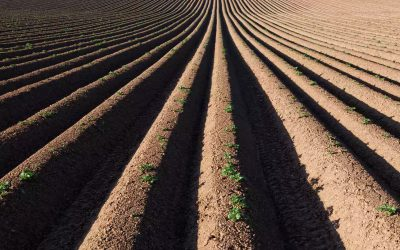 UK farmers to be given first ever targets on soil health
