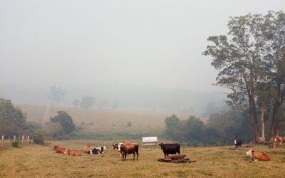 Organic Farmer's Bushfire Appeal
